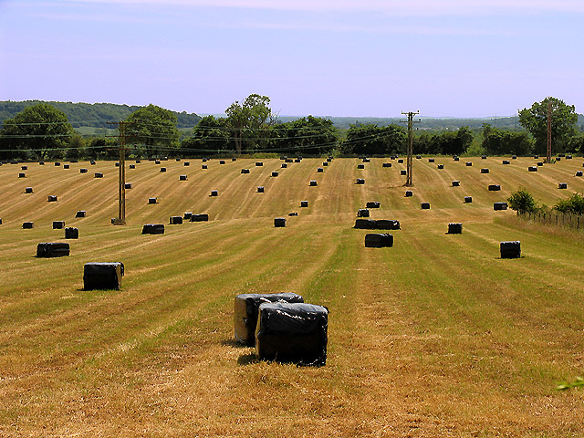 Silage  Bales on farmland near Pangbourne