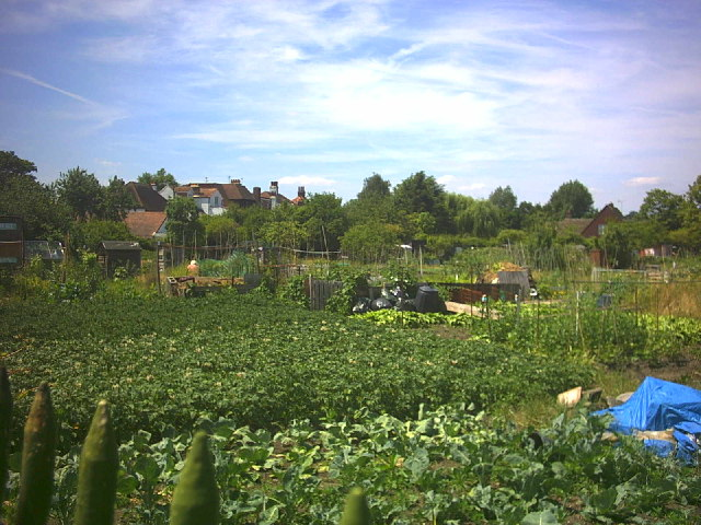 Cottenham Park allotments, Cambridge Road.