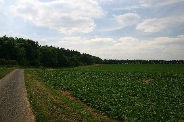 Hyde Wood and Queen Elizabeth's Walk