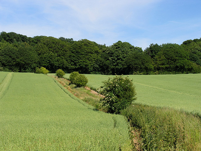 Farmland near Eling