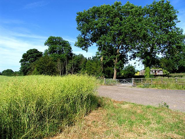 Farmland near Little Hungerford