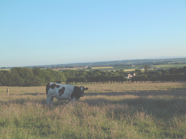 Farmland North of Shaley Brow - Billinge