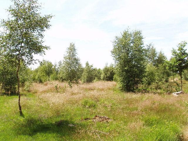 Stoke Common heathland