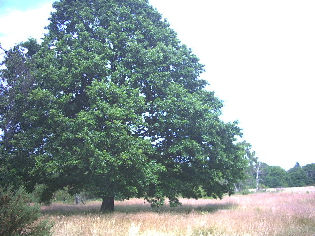 Barnes Common.