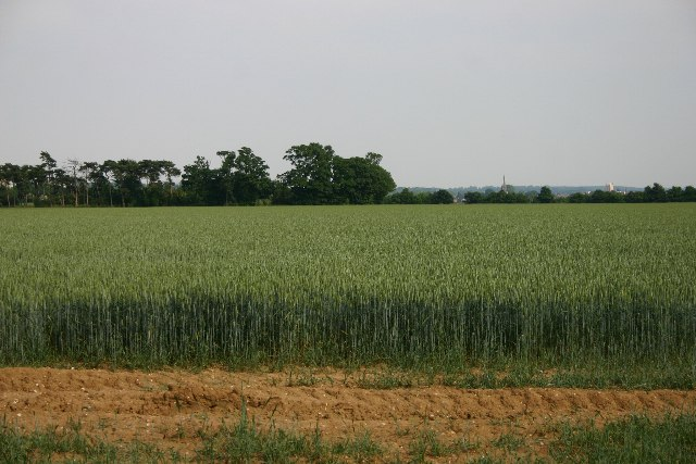 Field west of Bury St Edmunds