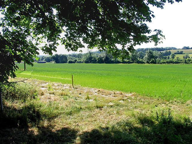Barn Elms Farmland