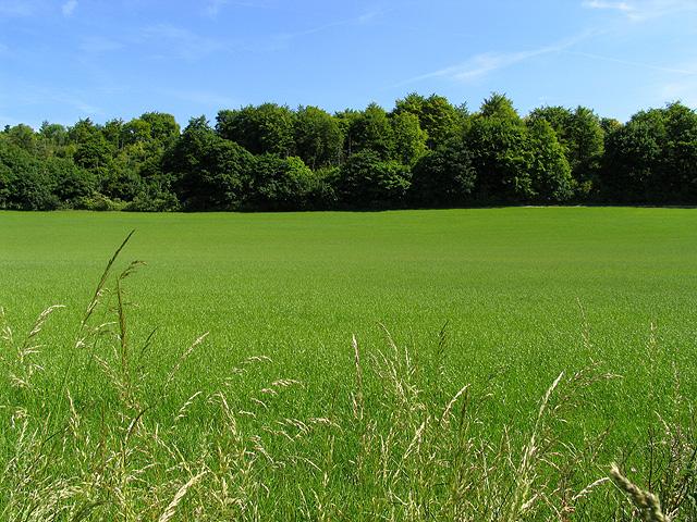 Crop near Basildon