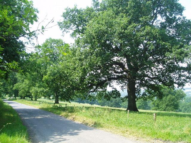Lane to Cinder Hill