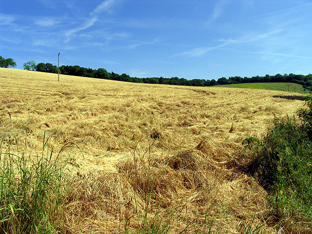Harvested Field near Streatley