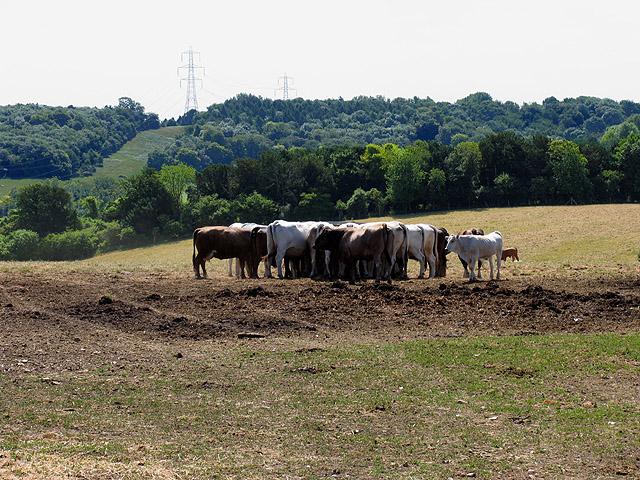 Farmland near Stichens Green and Streatley