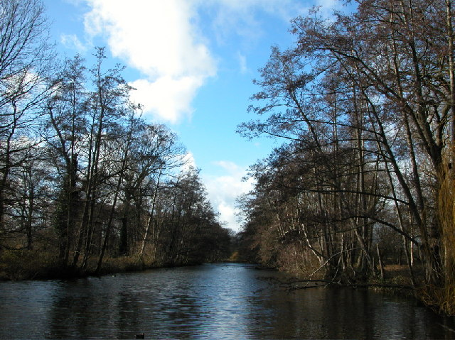 Canal Plantation, Bushy Park