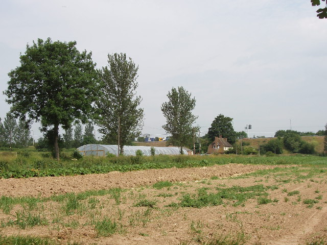 Farm with plastic tunnel greenhouse, near New Denham