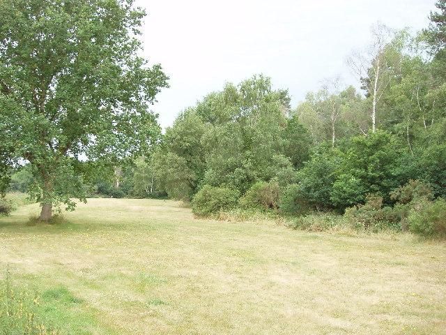 East Burnham Common in Burnham Beeches