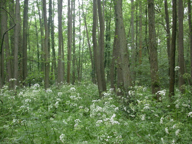 Coombswell Copse