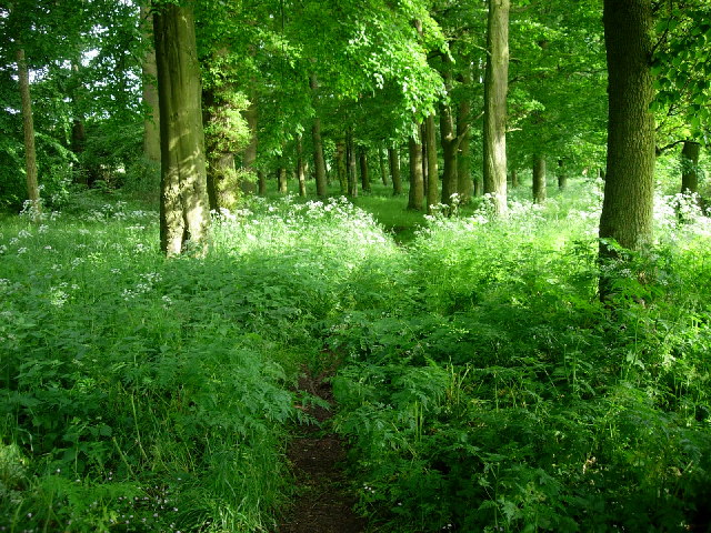 Woodland, Birkhill
