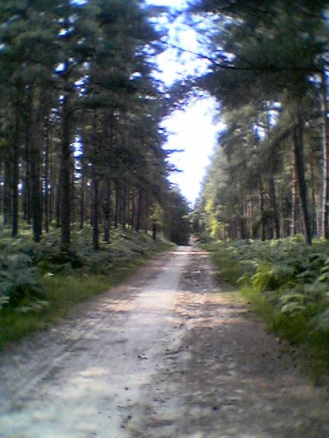 Bracknell Forest towards Caesar's Camp