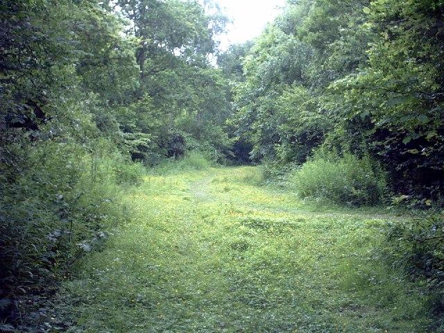 Ham Street Woods - Gill Farm Track