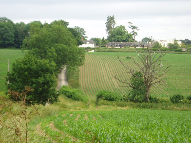Looking over to Buxhalls from the Hillhouse Farm lane