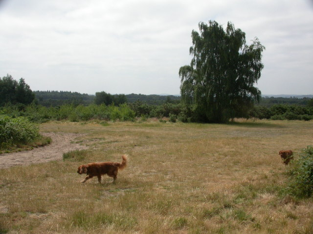 Ludshott  Common