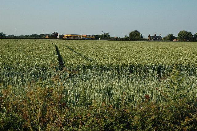 Wheat Field between Sandy Lane and Warrington Road