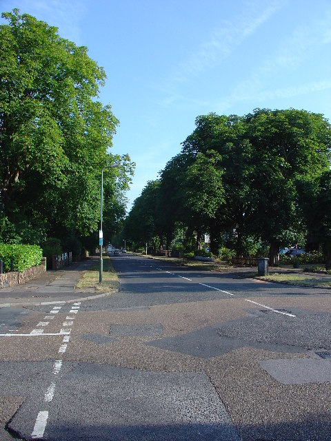 Tree lined street in Sunbury on Thames