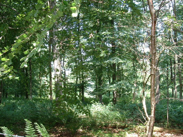 Woods nr Michelgrove