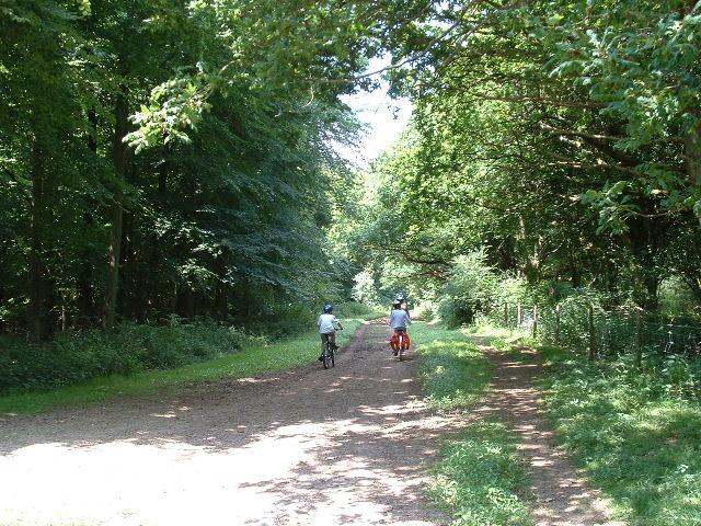 Woodland Bridleway