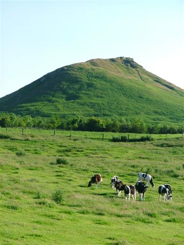 Cows Grazing under the shadow of Roseberry