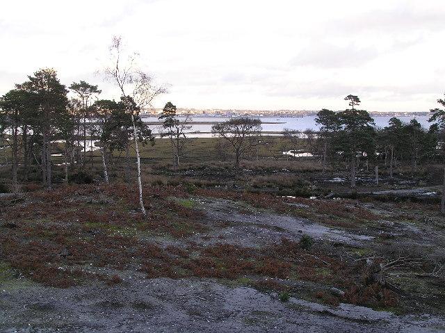 Scrub & salt marsh