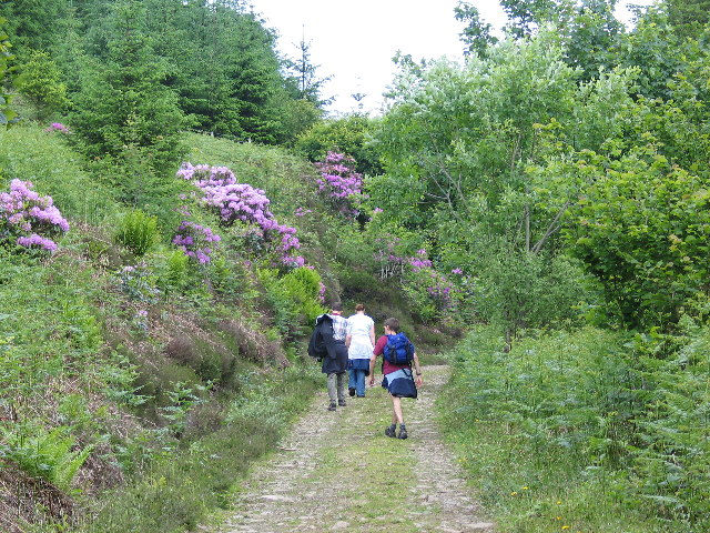 Path from Ardfern to Lunga House