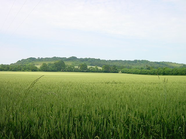 High Wood from Greenway Court Farm