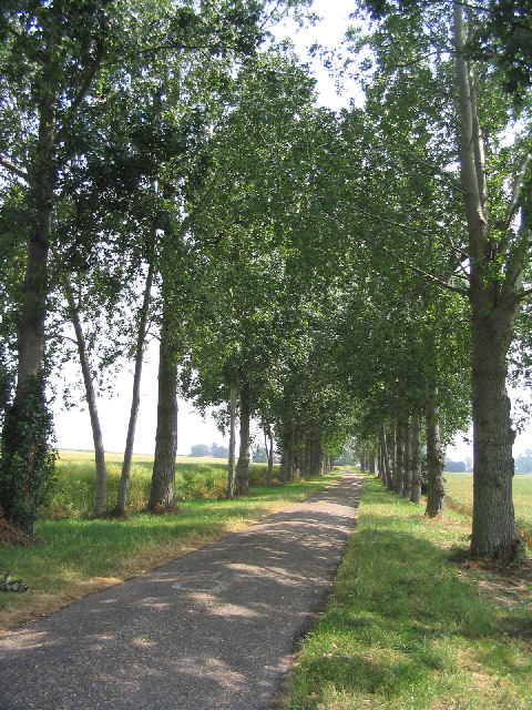 Tree lined drive, South Ockendon Hall, Essex