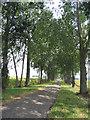 TQ5983 : Tree lined drive, South Ockendon Hall, Essex by John Winfield