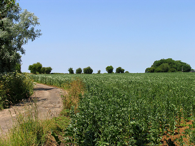 Farmland north of the Roman Road