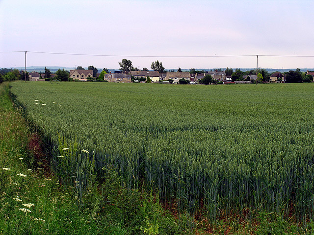 Wheatfield over Anglo Saxon Burial Ground