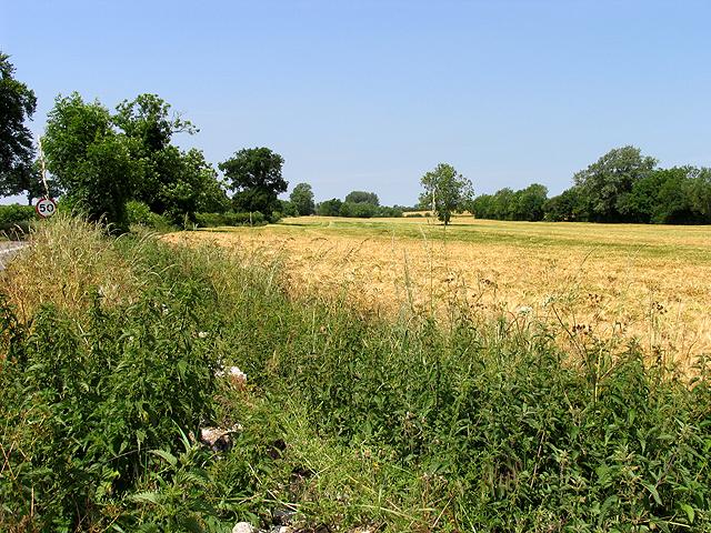 Barley Growing on Farmland near Poulton