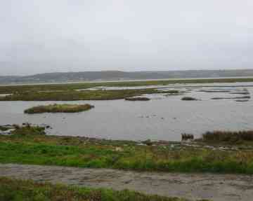 Wildfowl and Wetlands Centre, Llanelli