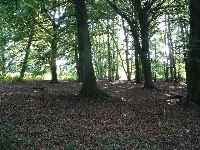 Paines Wood