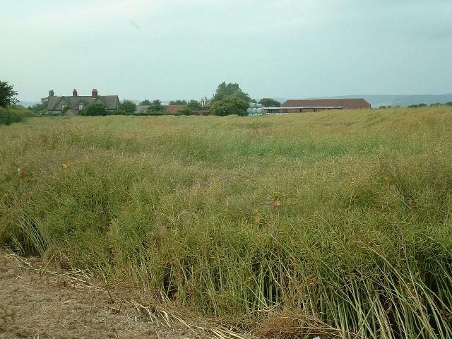 Headhone Farm
