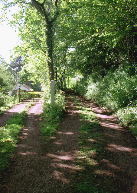 Rural Track near Stogumber