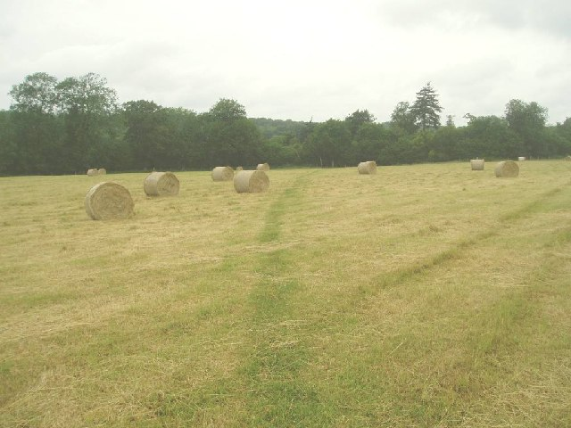 Footpath over the field