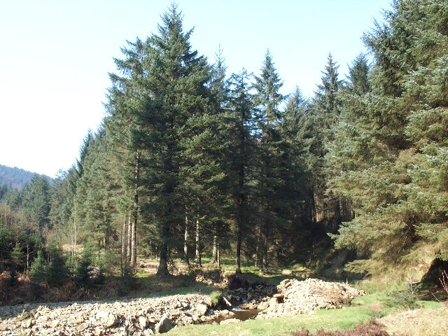 Lady Clough Woods