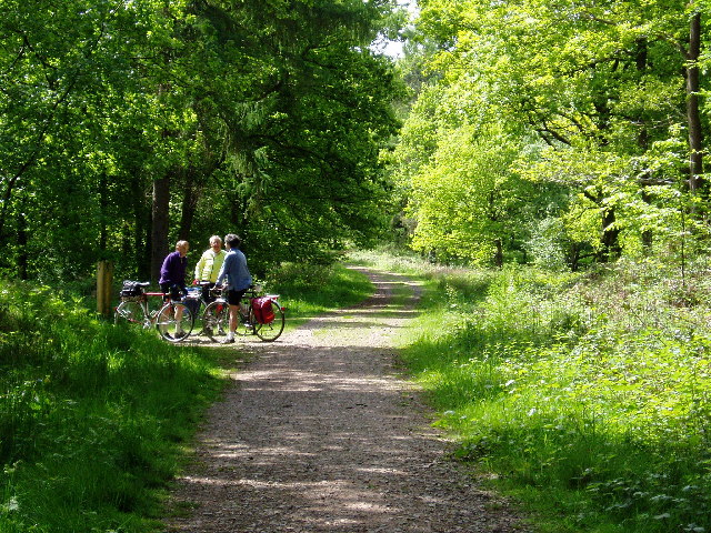 Forest of Dean cycle tracks
