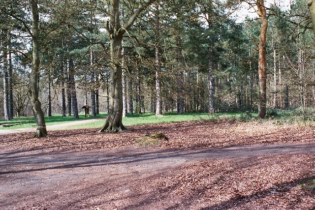 Picnic Area nr B1106, Thetford Forest