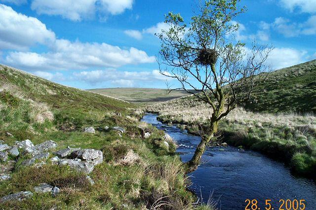 Upper Avon valley - Dartmoor