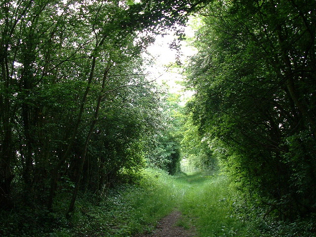 An Essex footpath