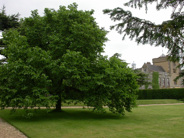 Canons Ashby House and Mulberry Tree