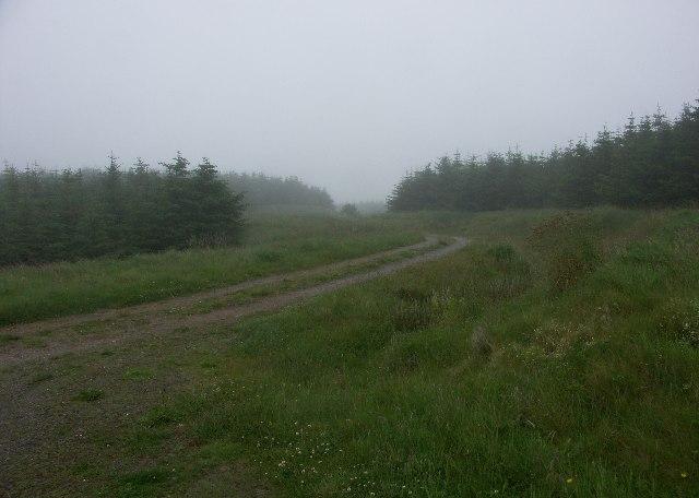 Killypole Forest near Machrihanish