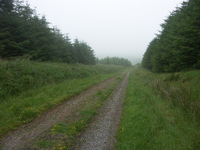 Killypole Forest near Machrihanish