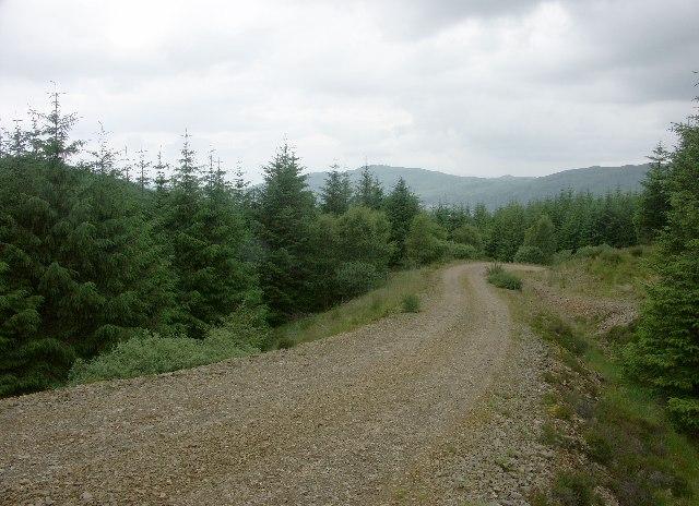 Forest near Kilmelford
